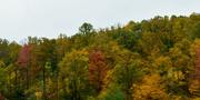 12th Oct 2020 - Autumn trees