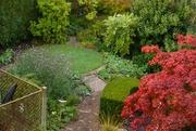 13th Oct 2020 - an autumn garden