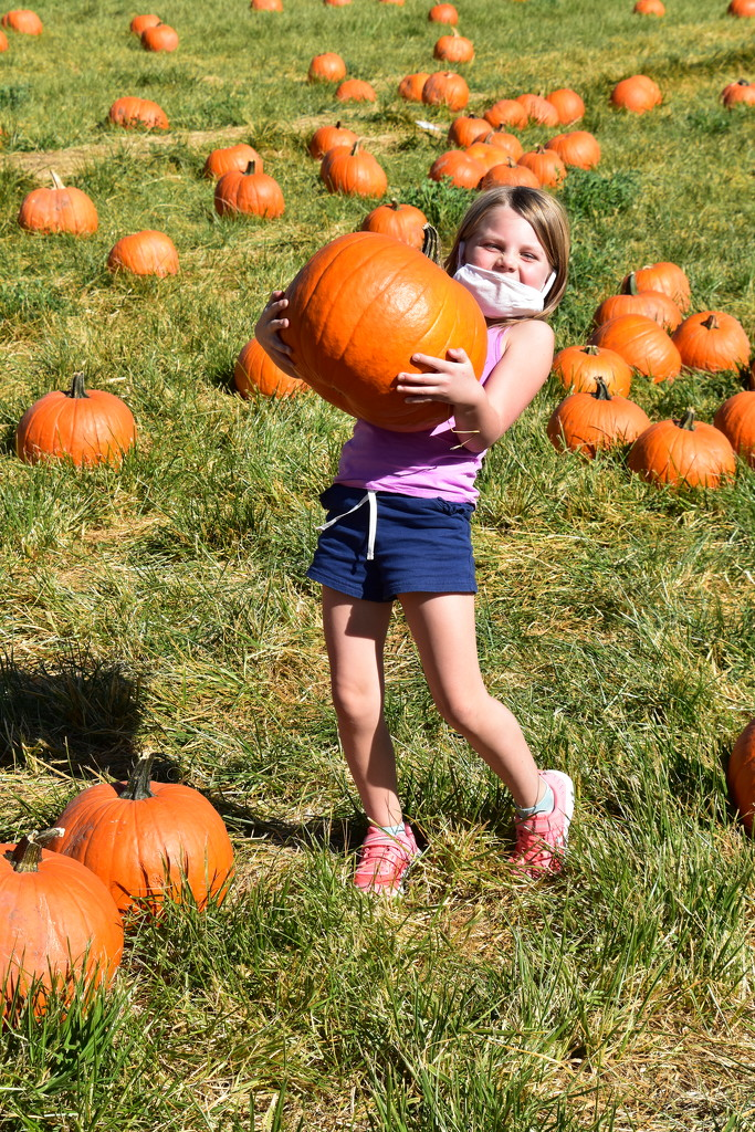 Another Pumpkin Carrier. by bigdad