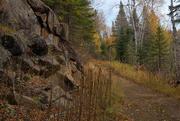 9th Oct 2020 - Old Logging Road