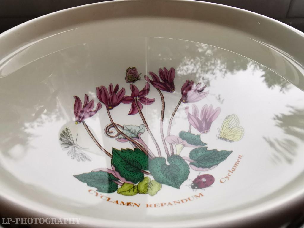 A Bowl Of Reflections by tiredpanda