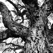 14th Oct 2020 - Trees of Keurboom #3
