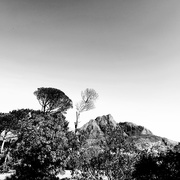 15th Oct 2020 - Trees of Keurboom #4