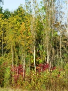 13th Oct 2020 - Autumn Colours