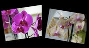 12th Oct 2020 - Orchids