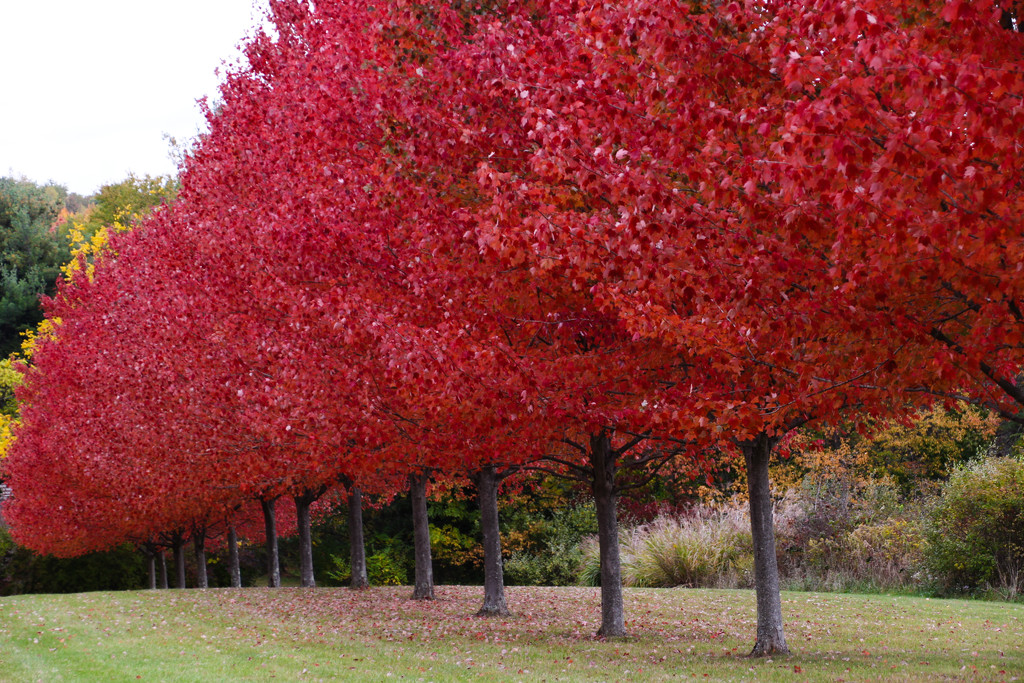 Red trees by mittens