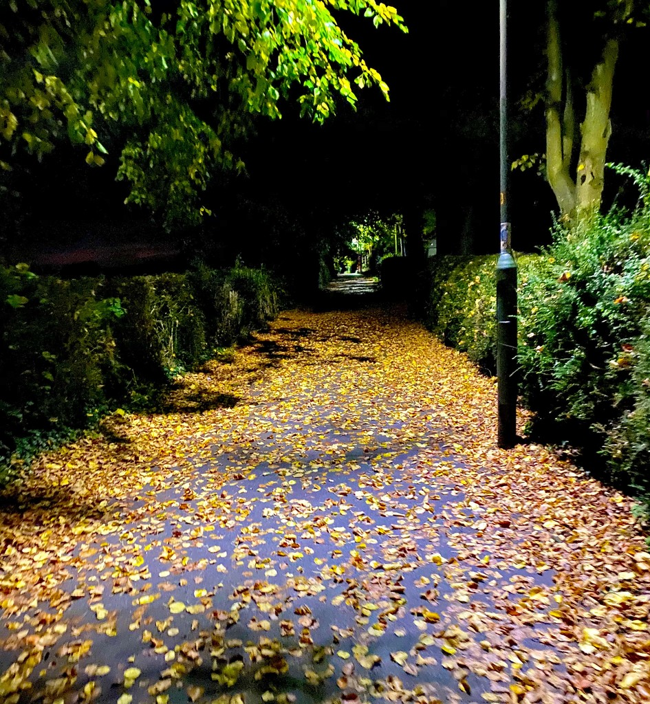 Autumnal alleyway.  by 365projectdrewpdavies