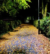 12th Oct 2020 - Autumnal alleyway.