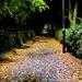 Autumnal alleyway.