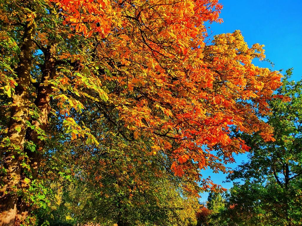 Feeling autumnal by isaacsnek