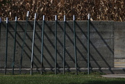 5th Oct 2020 - Snow Fence Rails