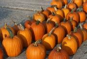 24th Sep 2020 - Pumpkin Harvest