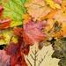 Rainy Day Leaf Pile  by jo38