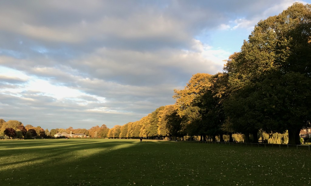 Autumn tree line by photopedlar