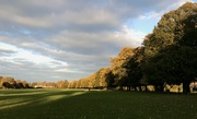 13th Oct 2020 - Autumn tree line