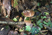 13th Oct 2020 - Little treasures of the Autumn woods