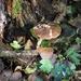 Little treasures of the Autumn woods