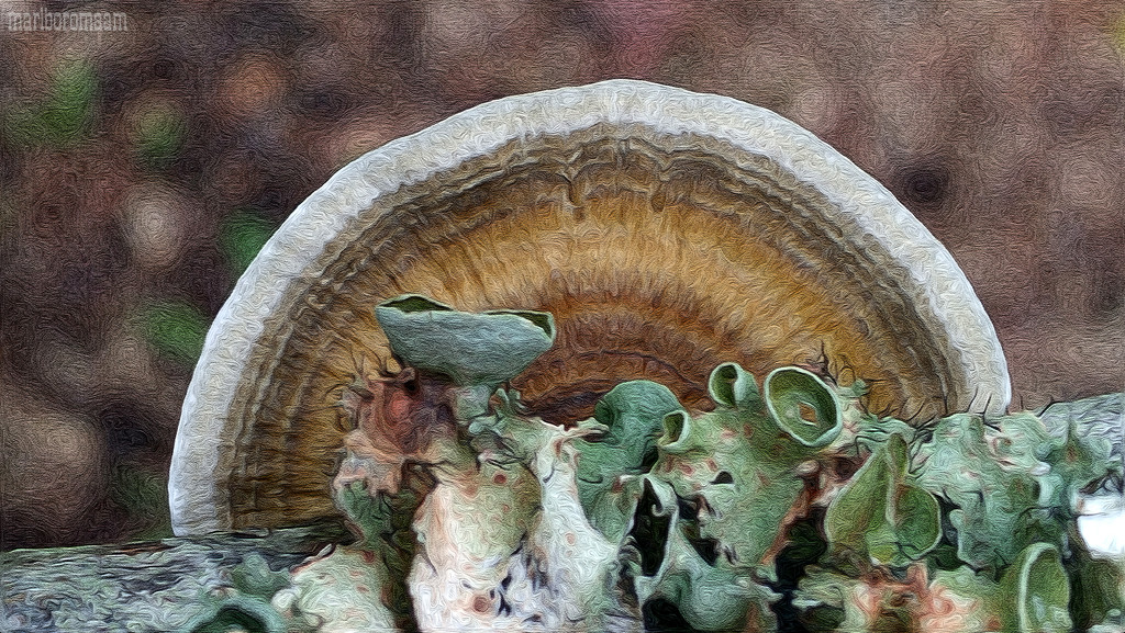 Painted Fungus and Lichen... by marlboromaam