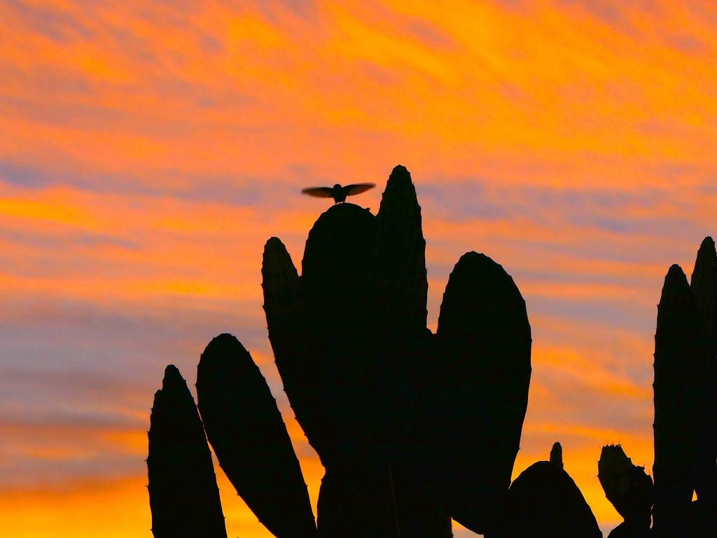 Top Bird by redy4et