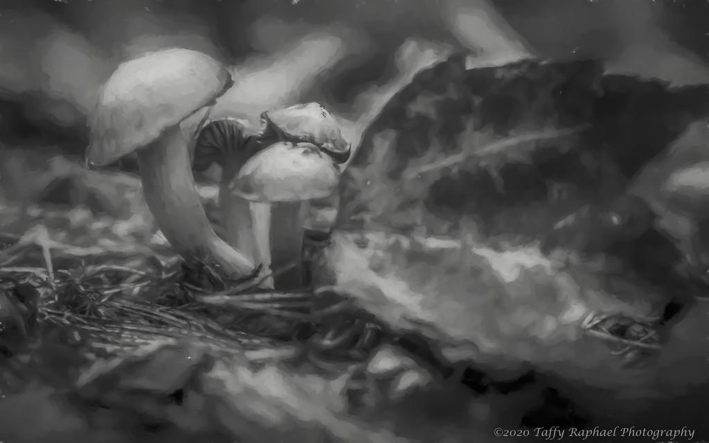 Fungi Meeting by taffy