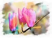 14th Oct 2020 - Magnolia buds
