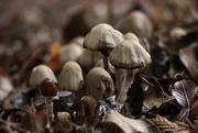 14th Oct 2020 - Flourishing Fungi