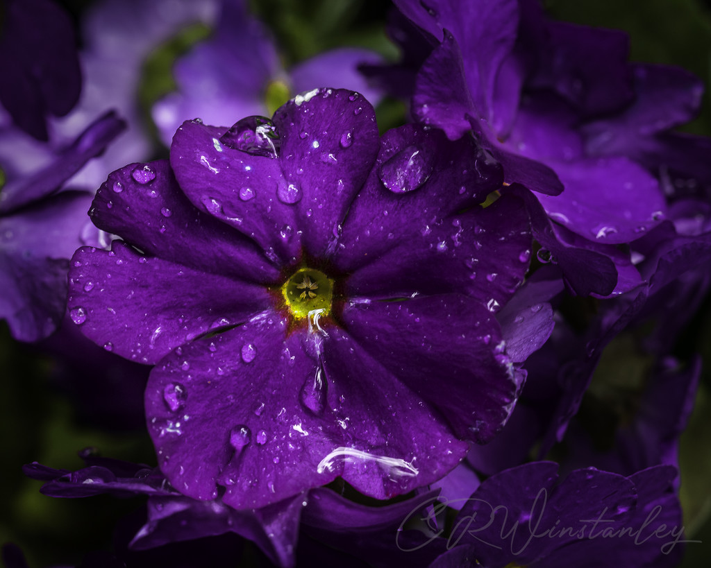 Purple by kipper1951