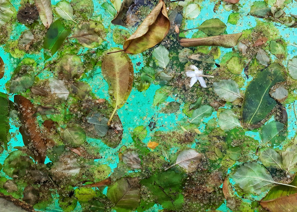 Water detritus  by salza