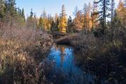 14th Oct 2020 - Tamarack Bog