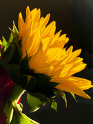 14th Oct 2020 - A touch of sunshine