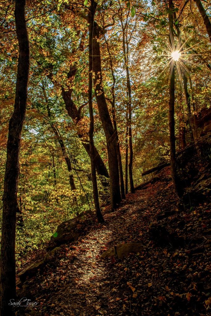 carpeted autumn trail by samae