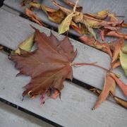 14th Oct 2020 - Leaf