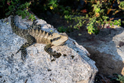 16th Oct 2020 - Water Dragon