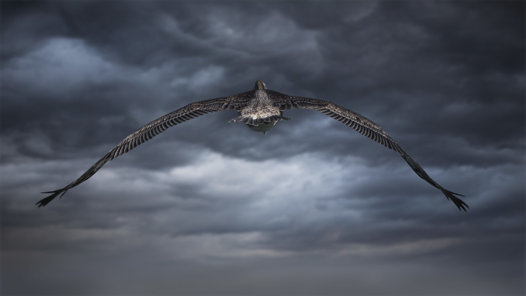 The Flyaway by mikegifford