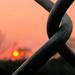 Sunset & Fence
