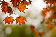 14th Oct 2020 - Seasonal colour