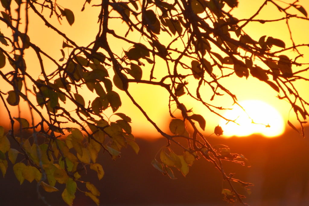 Changing Leaves at Sunset by genealogygenie