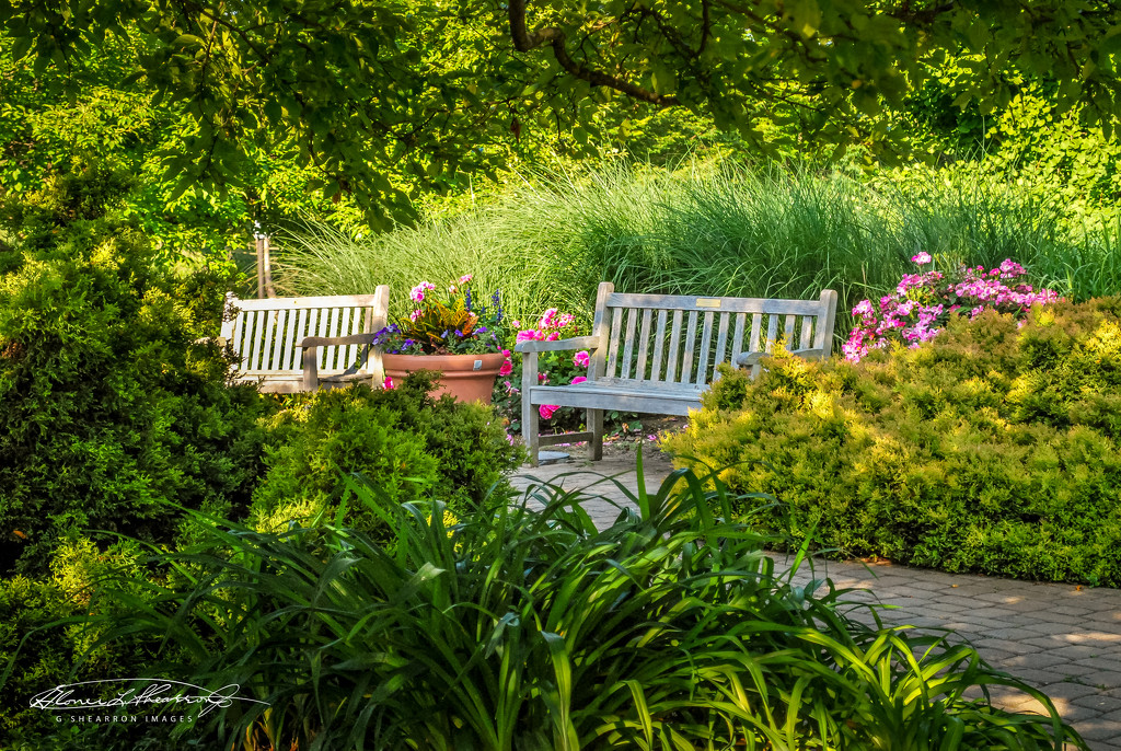 Benches in Summer by ggshearron