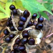 13th Oct 2020 - Mystery Seeds