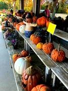 14th Oct 2020 - Fall Festivities