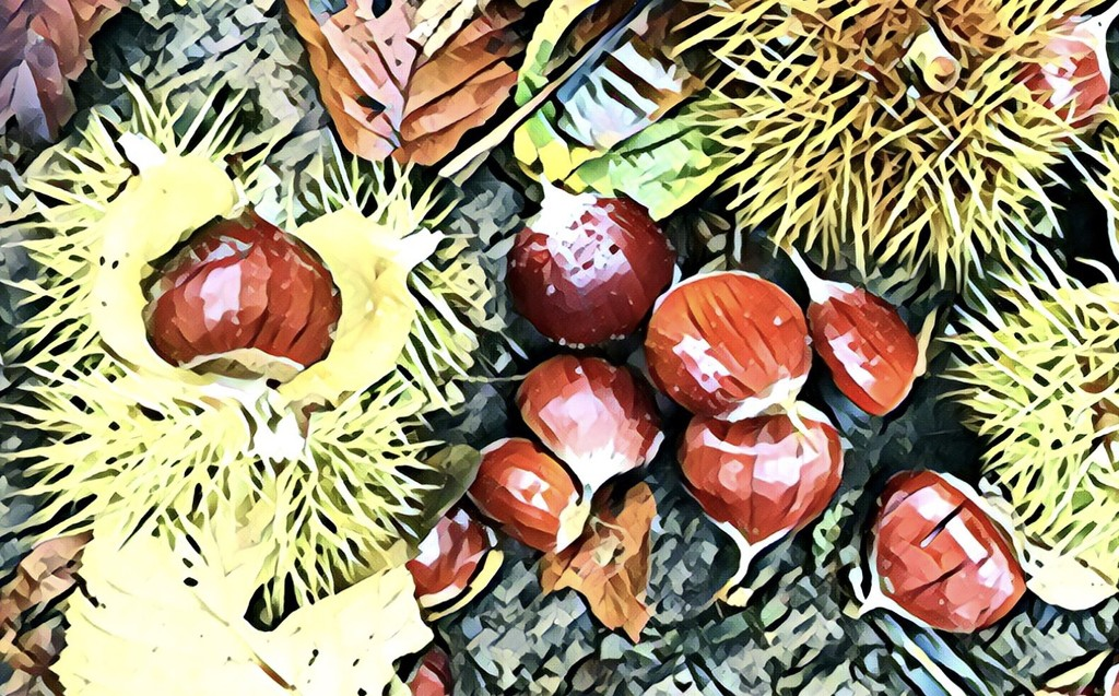 Chestnuts by boogie