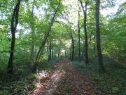 15th Oct 2020 - Morning sun through the trees