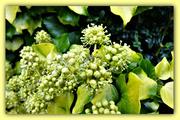 15th Oct 2020 - Tiny florets