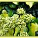 Tiny florets