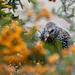 Birds with berries