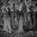 Cedar Grove by tosee