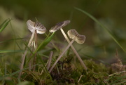 15th Oct 2020 - Toadstools....
