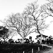 18th Oct 2020 - Trees of Keurboom #5
