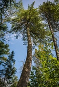 13th Sep 2020 - Big Pine
