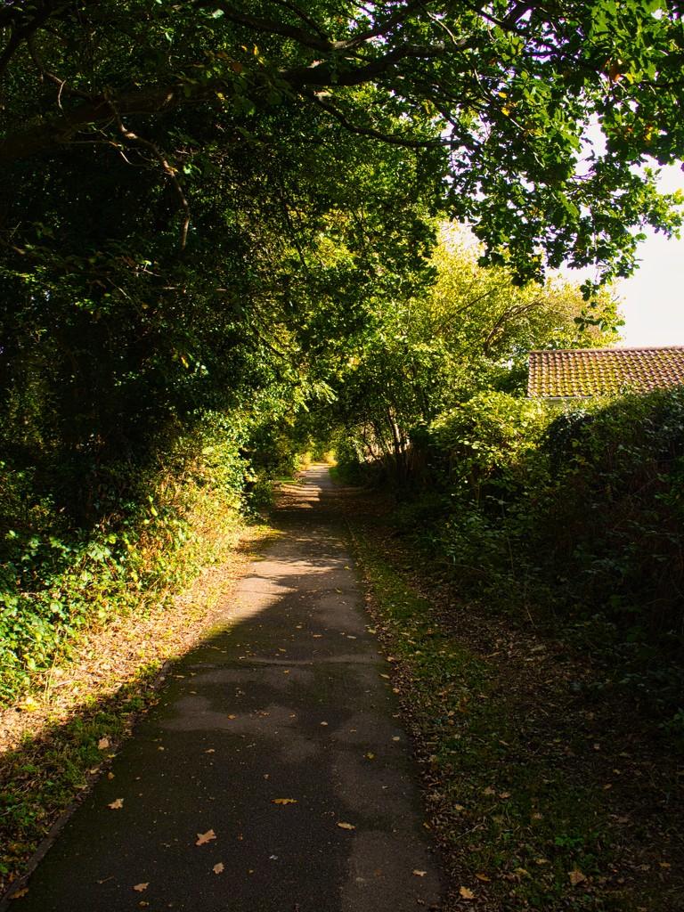 Shady footpath by 365projectmalh3